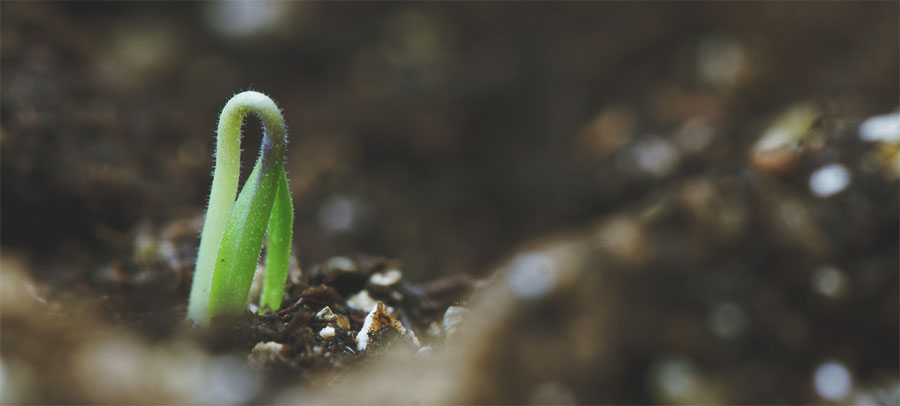 <strong>Confessions of an Impatient Seedling</strong> <br/><br/> <em>God, I would give anything to feel the sun again.</em><br/><br/>